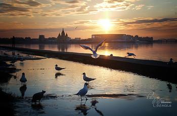 """Где-то там / """"Бог полюбил птиц и создал деревья. Человек полюбил птиц и создал клетки."""""""