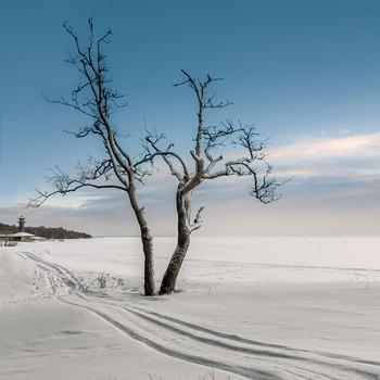 / Зима, Комарово,Финский залив