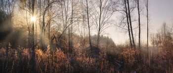 Солнце зимнего дня / Тула. Ясная Поляна