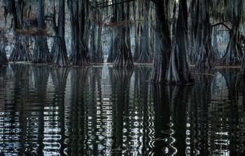 На озере Кэддо / США
