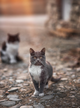 Артист...) / Кот живущий в Берендеевом царстве (Лазаревское)