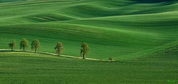 Моравский ковер / весенние поля