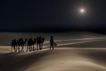 Ночной караван / Сахара