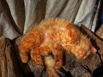 Мартовские нежности... / Кошка на мартовском сонце