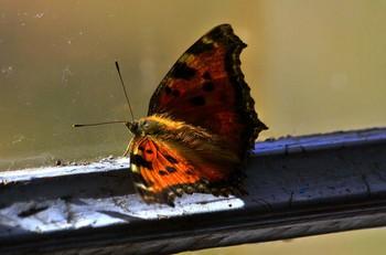 """/ """"Залетевшая в комнату бабочка бьётся О прозрачные стёкла воздушными крыльями. А за стёклами небо родное смеётся, И его достичь ей пока не удается...."""""""