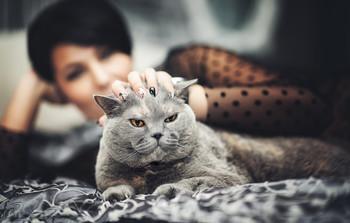 Две грации - женщины и кошки.. / ...
