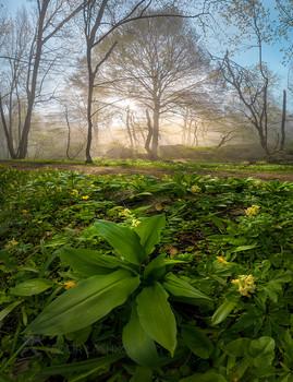 Весеннее пробуждение / Лесной, туманный, рассвет. Лёгкая весенняя листва щедро пропускает солнечные лучи.  Природный заказник «Стрижамент». Май, 2021 года.  Из фотопроекта «Открывая Ставрополье».
