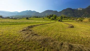 Словения, предгорье Альп. Поле и скошенная трава. / Утром по дороге к озеру Блед.