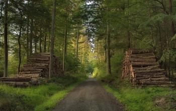Утро в сентябре.. / Осенний лес . Утренний пейзаж .