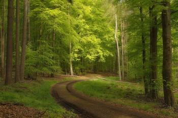 Вчерашняя весна / Утро в весеннем лесу . Зарисовка .