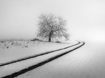 Зимняя графика / Откровенный рисунок Природы – там, где остаётся только тени и свет.  Из фотопроекта «Музыка тени и света».