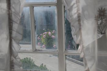 """А за окном цветут пионы / Из серии""""Про опустевший дом"""""""