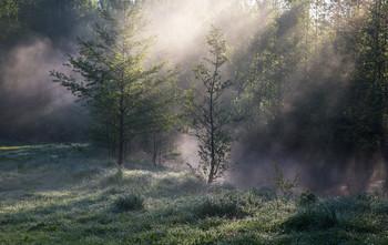 Утро / утро, туман, Фрязино, Гребнево