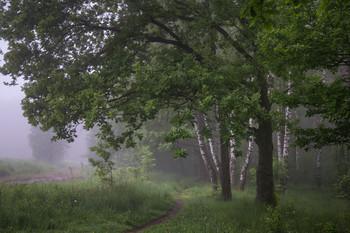 Утро туманное / утро, туман, Фрязино, Гребнево