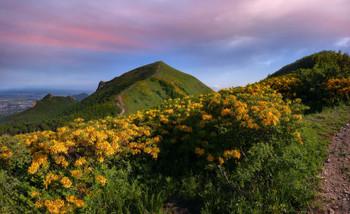 Предзакатная / На горе Бештау заканчивает цветение желтый рододендрон