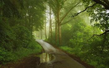 Дожди и туманы / Летнее туманное утро .