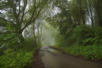 Дождливое утро.. / Туманное утро после дождя.