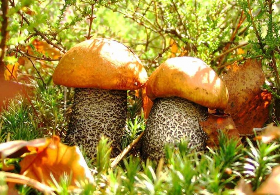 Осенние грибы открытка