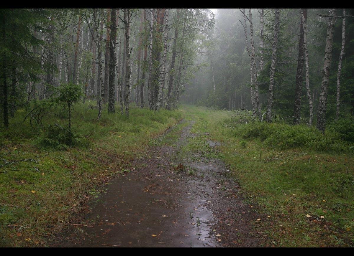 фото дождливого леса итоге получилась