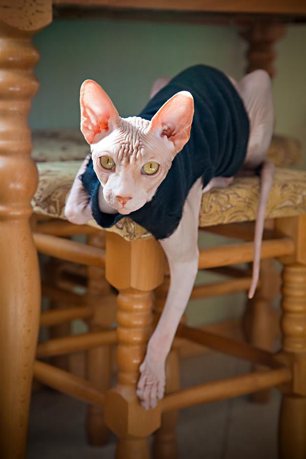 Картинки прикольные про котов лысых, сделать праздничную