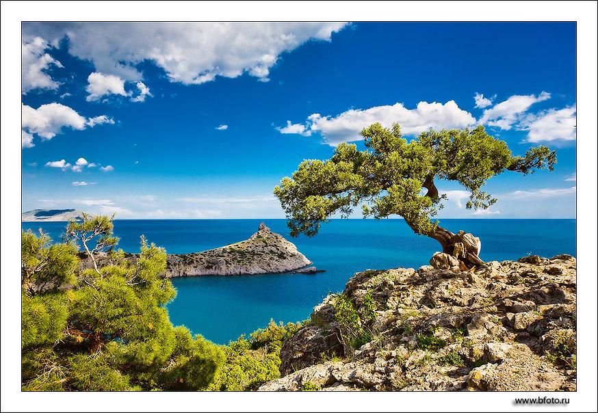 Крым новый свет открытки, фото
