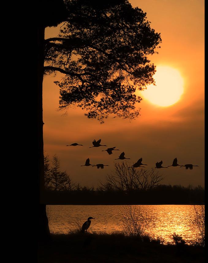 картинки осень стаи птиц вертикальные каких чистокровных скакунов