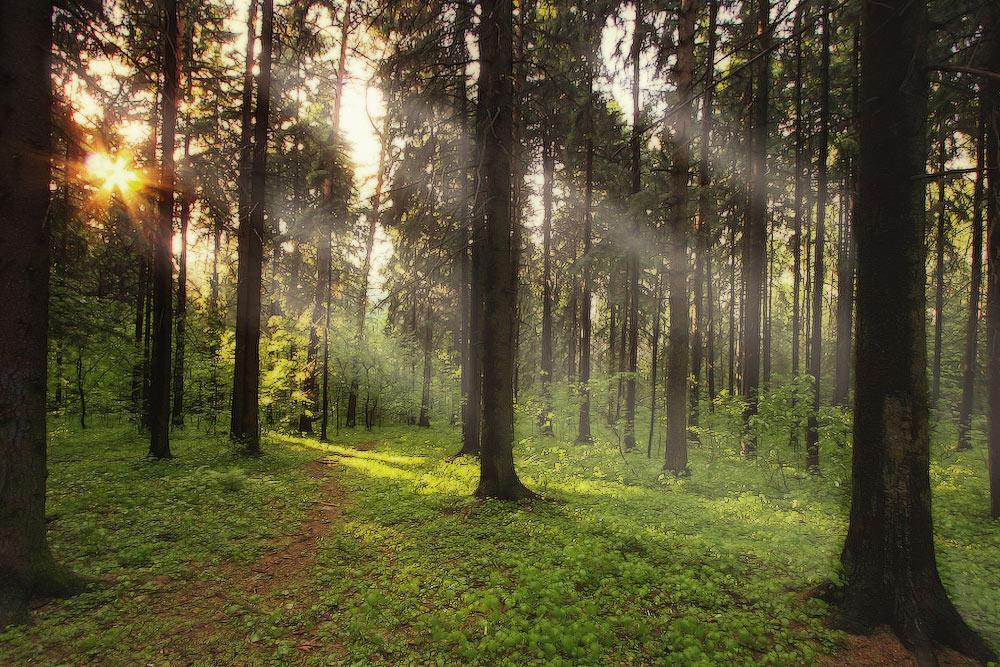 фото в лесу после дождя любимым питомцам фрэн