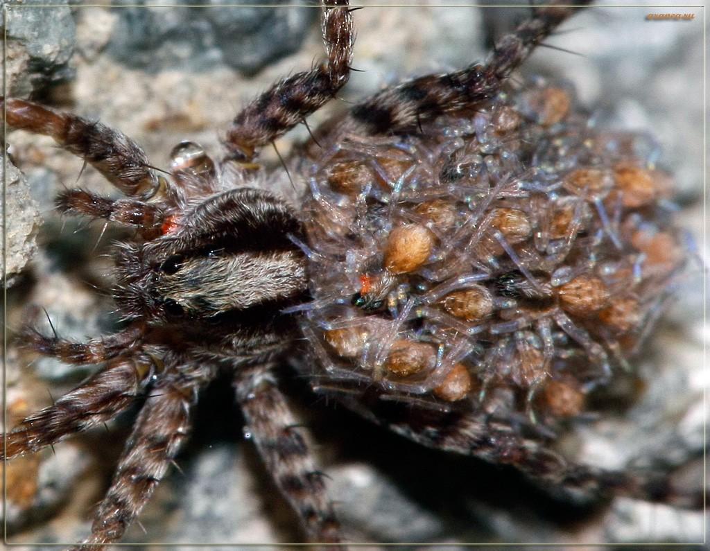 сегодня паук и паучиха картинки знакомить читателей