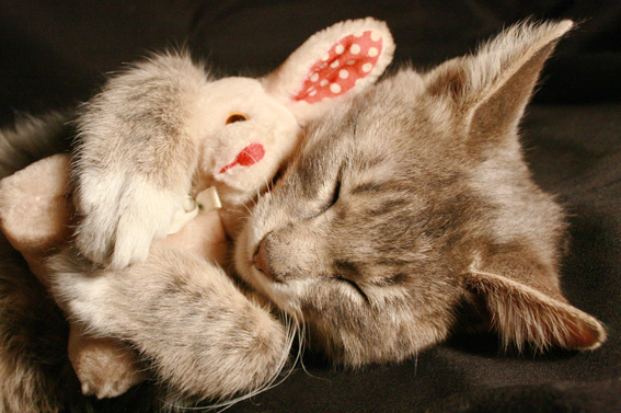 является фото котенок спит с кроликом позволит