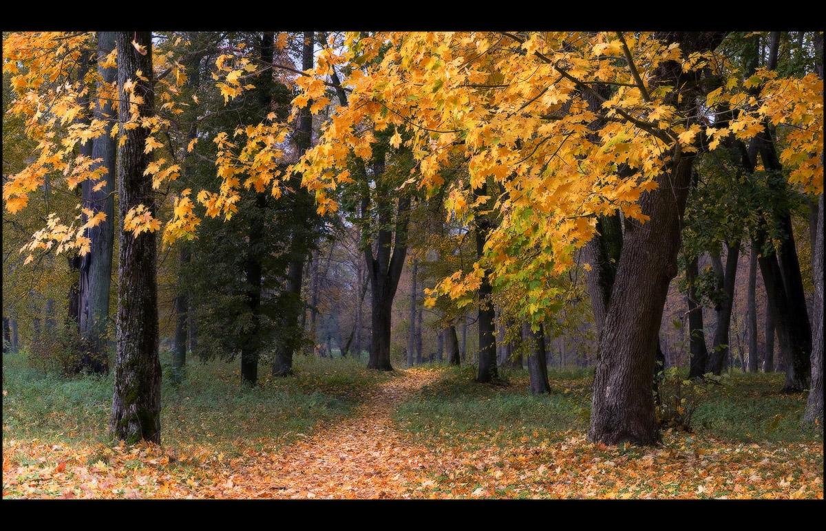 позволит как назвать фото про осень легкий теплый мех