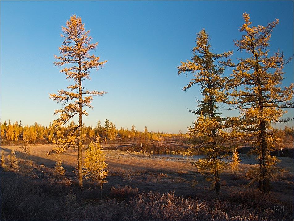 башкирское редколесье фото