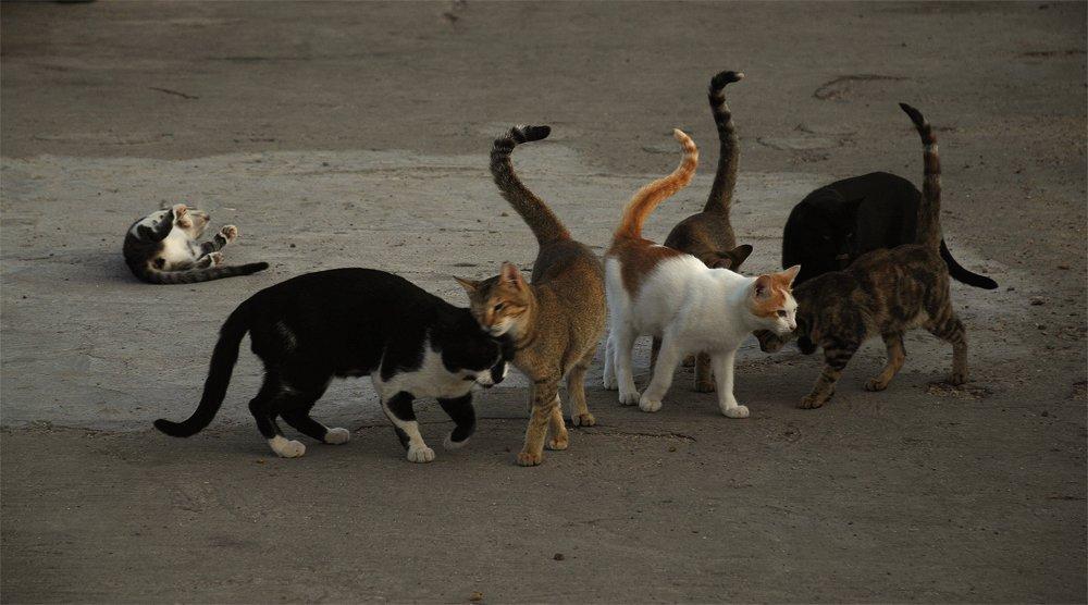 Картинки про мартовских котов с юмором