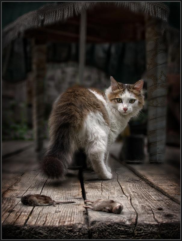 Чайка, картинки про кошек с надписями смешные до слез на весь экран