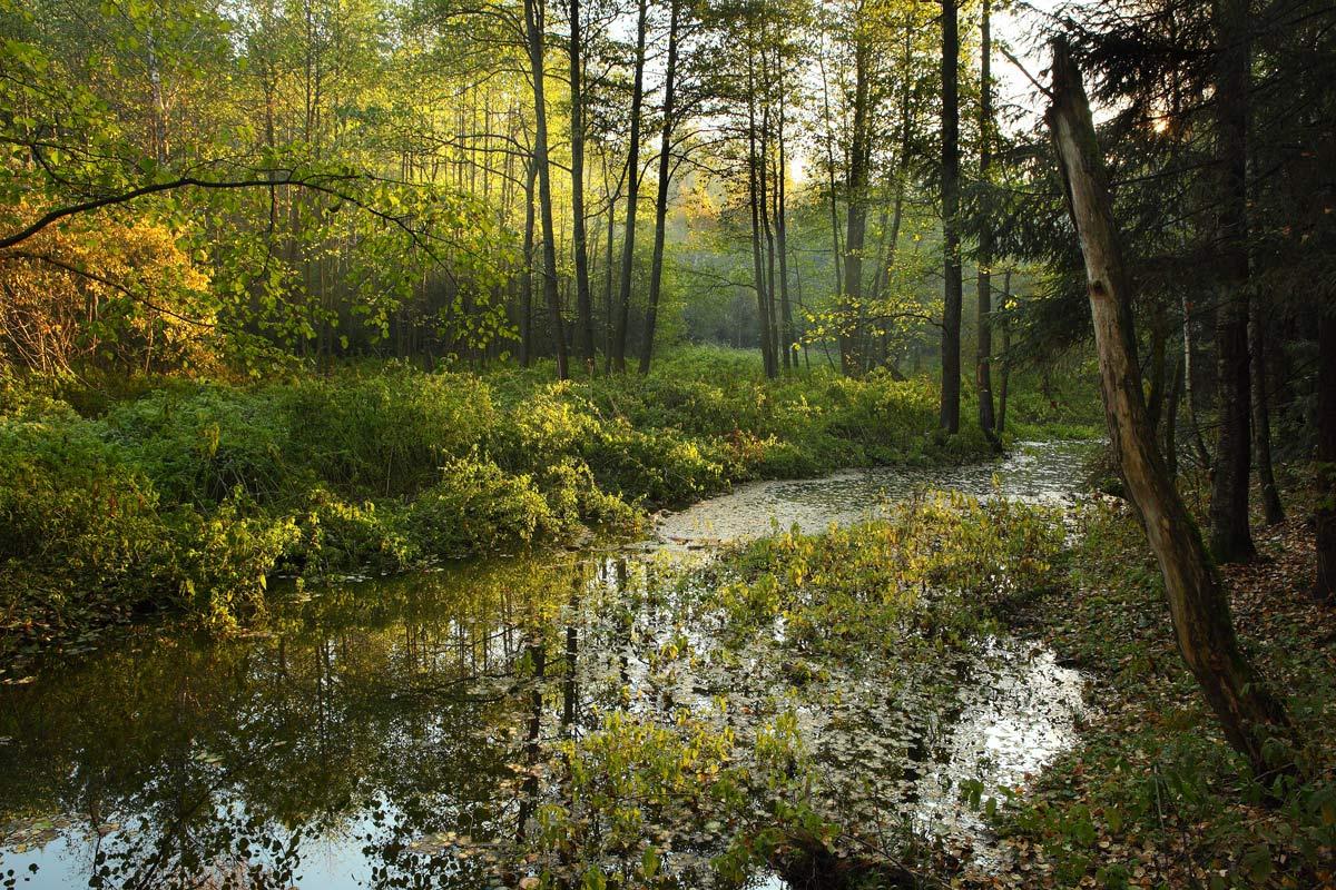 фото фото ручей в лесу роспись