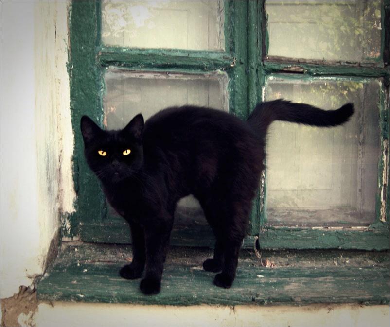 Автор фото с черными кошками