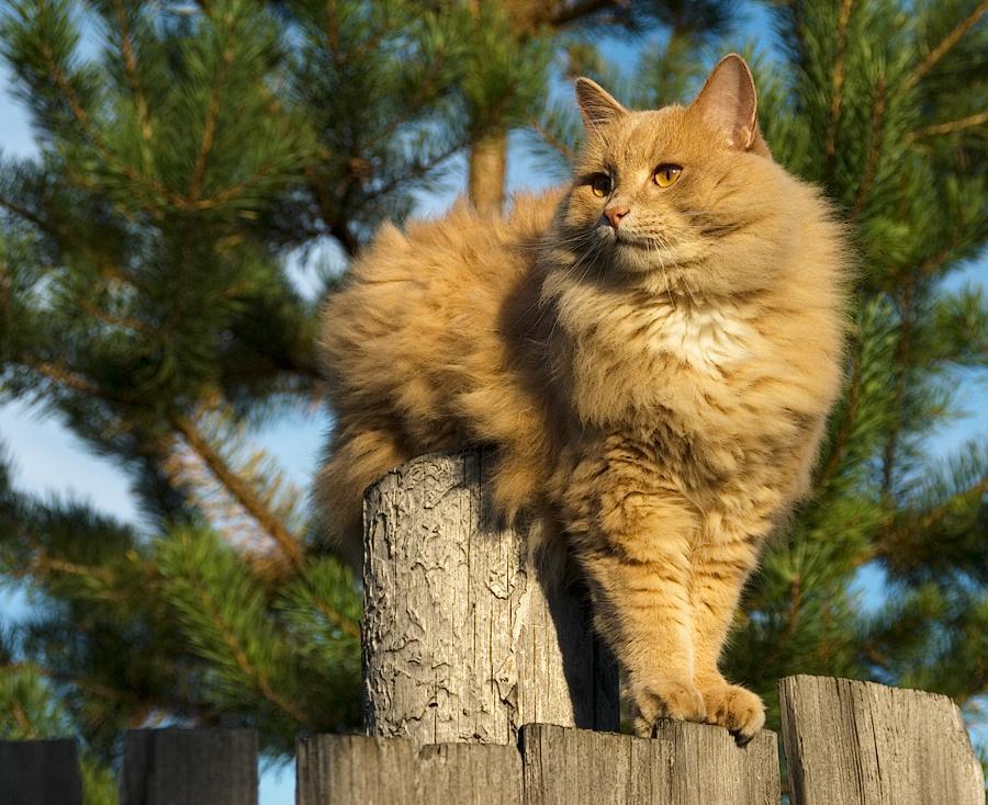 Котята в деревне фото перед приездом