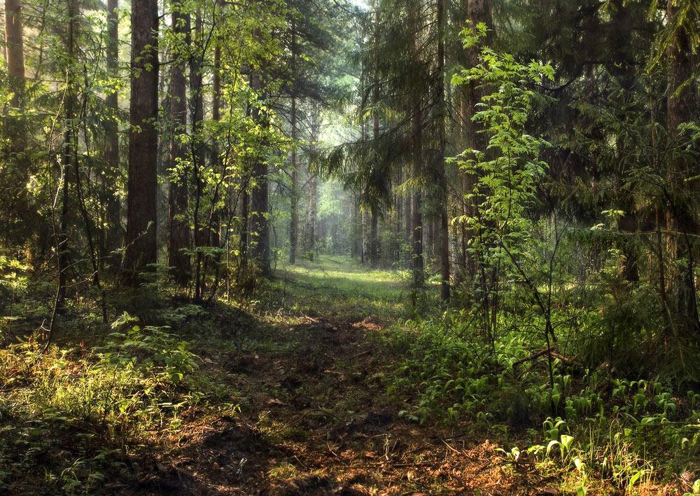 фотосайт художественной фотографии лес