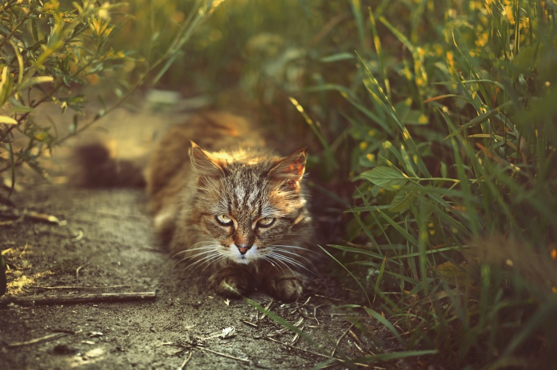 морозовский кот