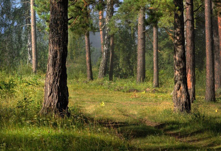 красивыми известными на опушке соснового леса фото тебя уже стоял