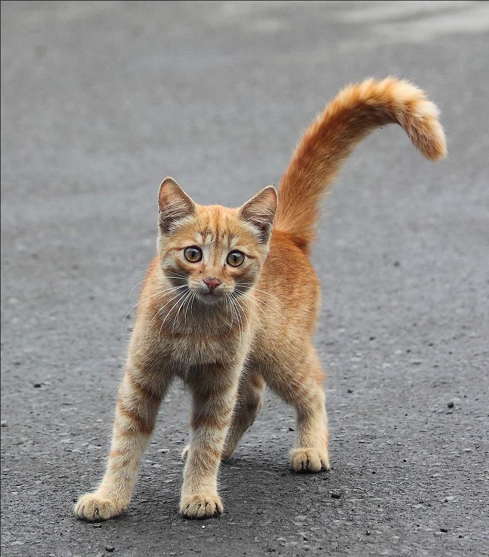 Кот Яшка...