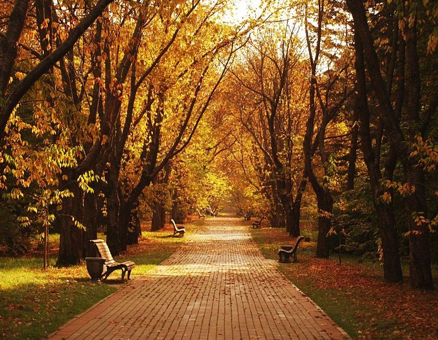 Осенью в парке картинки