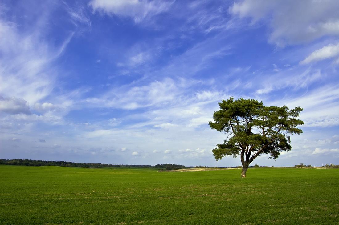 Картинка поле с деревьями