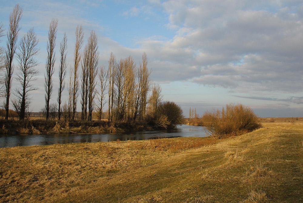 Фото тополя на берегу реки