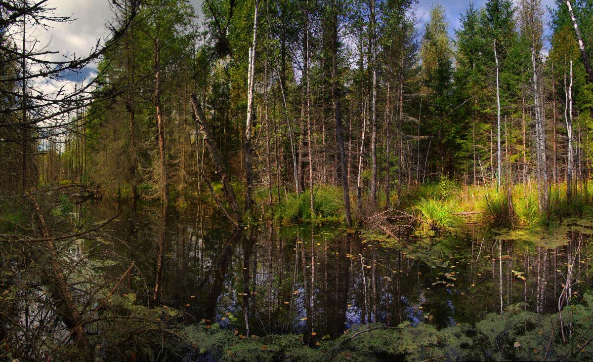 Болото лес картинки