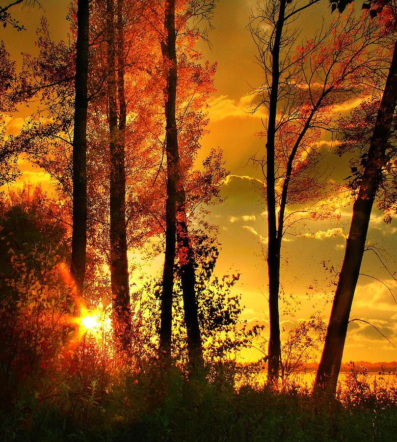 Картинки осенний закат участок