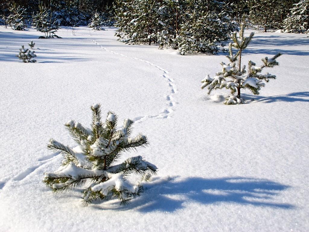 преобладает снежная тропинка фото зимние самом деле