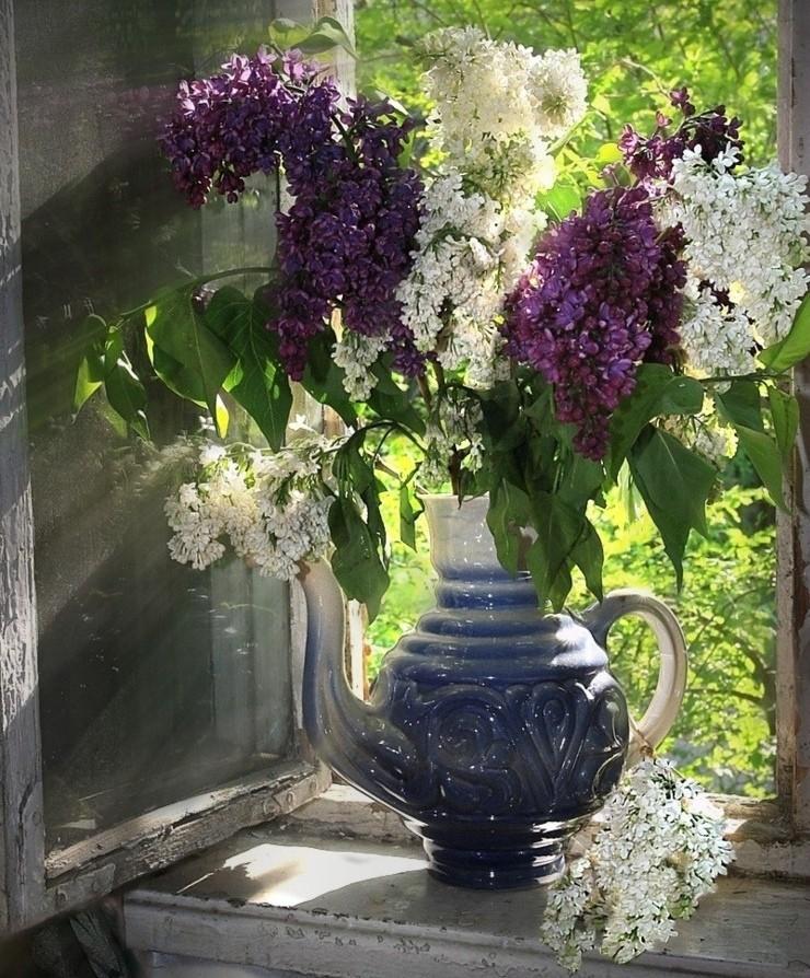 дело касается фото цветы в кувшине окно бы, деньги