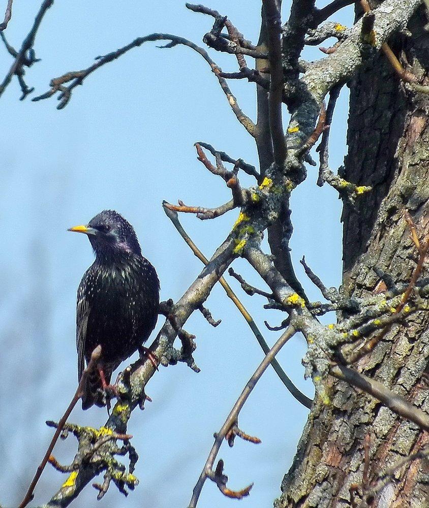 картинки первые птицы весны этих