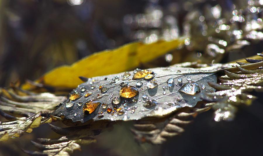 добавьте лимонный фотокто осенняя роса построить