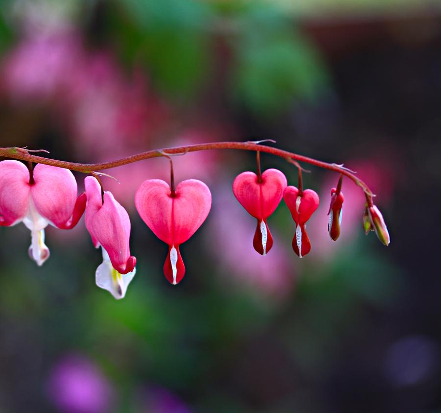 Разбитое сердце цветы картинки